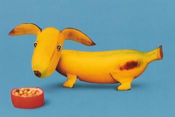 banana_dog.jpg